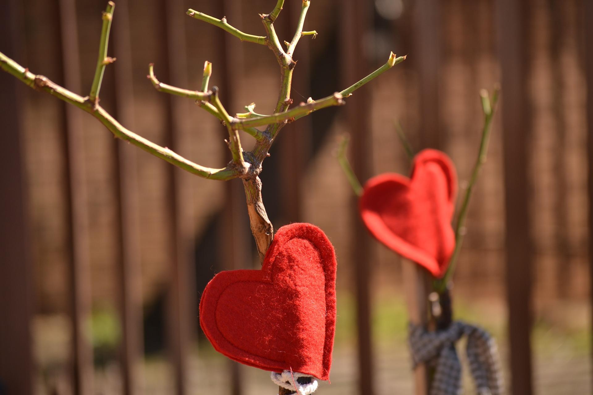 felt hearts on tree branch