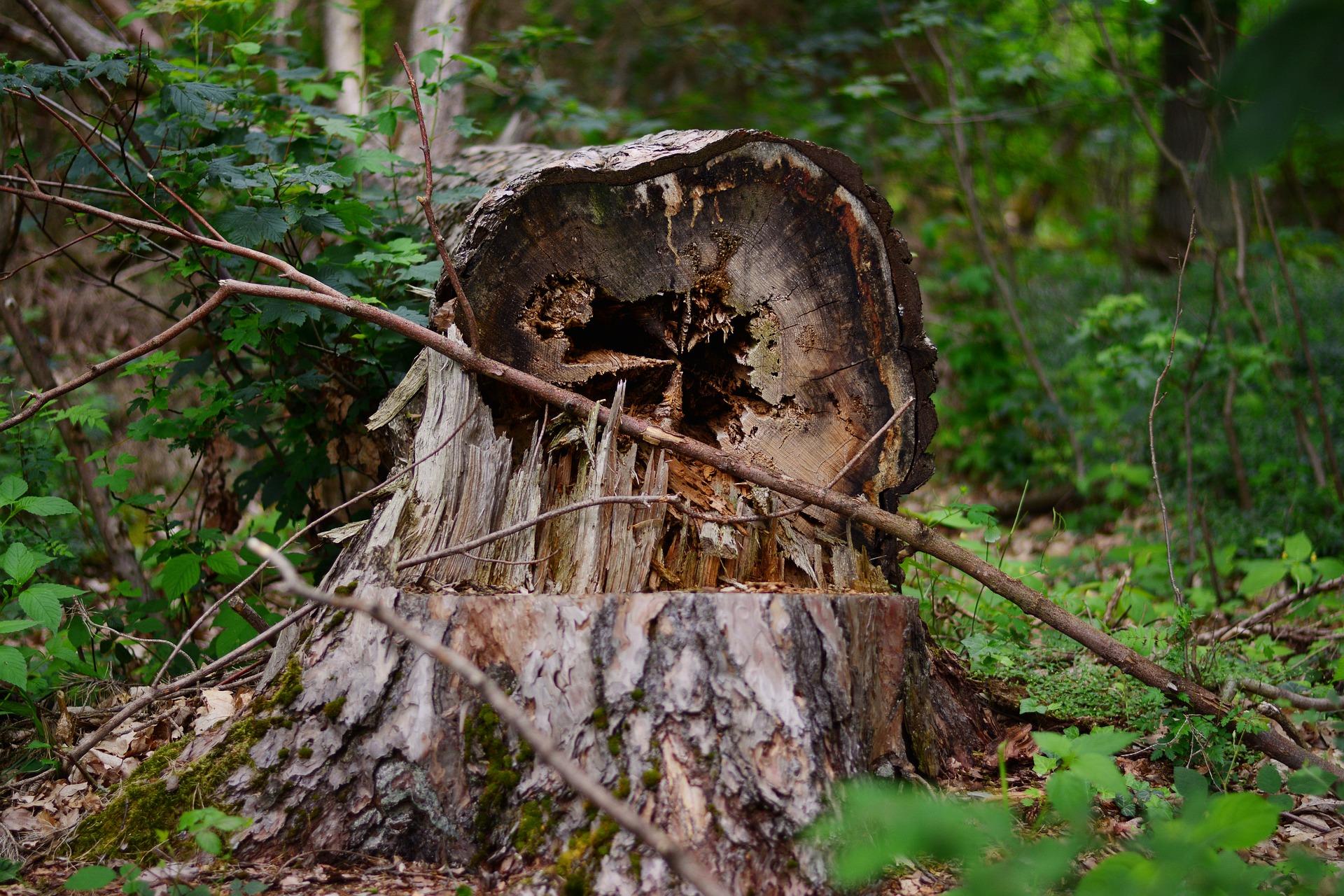 broken tree cracked